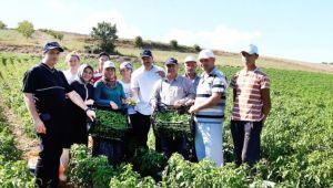Sanayi Bölgesinin Ham Madde İhtiyacı Yerel Tohumlar ile Karşılanacak