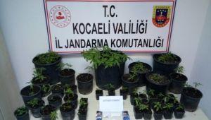 Fidancılık İşletmesine Uyuşturucu Operasyonu: 6 Gözaltı