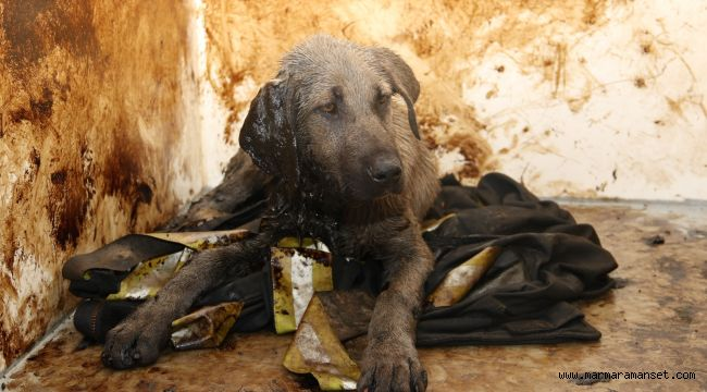 Zifte yapışan köpek, Büyükşehir'le hayata döndü