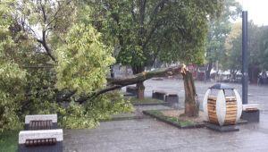 Şiddetli yağışta yine ağaç devrildi