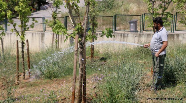 Tatlıkuyu Vadisine 3 bin ağaç dikildi