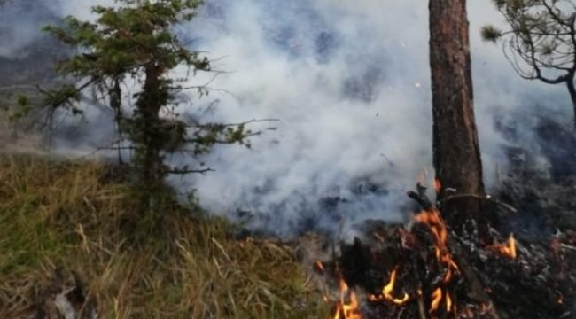 Sinop'ta ormanlık alanda yangın!!!