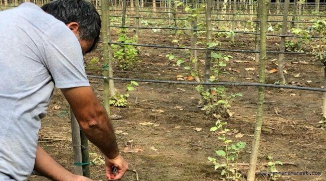 125 hektar alanda yerli fidan üretiliyor