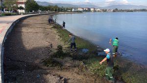 Sahillerden 53 ton yosun toplandı