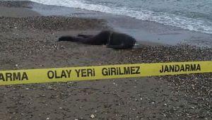 Eskihisar'da sahile erkek cesedi vurdu