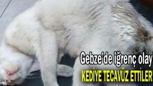 Gebze'de iğrenç olay! Kediye tecavüz ettiler