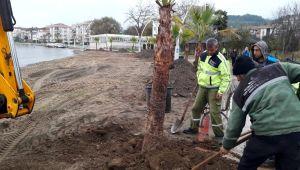 Karamürsel Dereköy Sahil Parkı'na yeni palmiyeler