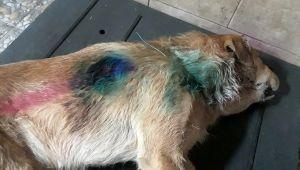 Silahla vurulan köpek tedaviye alındığı bakımevinde öldü