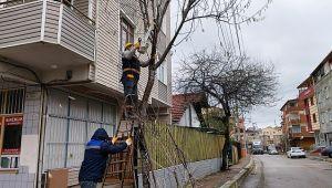 Darıca'da ağaç budama çalışmaları devam ediyor