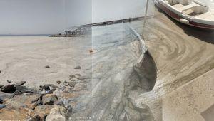 Darıca sahilinde deniz salyası birikti!
