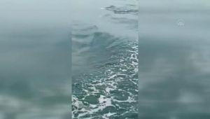 İzmit Körfezi'nde görülen yunuslar renkli görüntüler oluşturdu