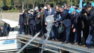Büyükşehir'den Körfez'e 6 bin balık yavrusu!